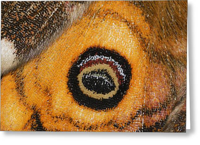 Thomas Marent Greeting Cards - Small Emperor Moth Eyespot On Wing Greeting Card by Thomas Marent