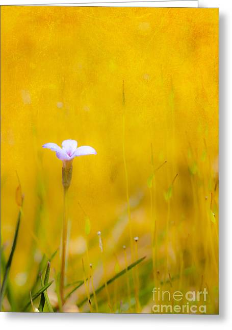Paint Photograph Greeting Cards - Small Flower in Moss - Greensboro North Carolina II Greeting Card by Dan Carmichael