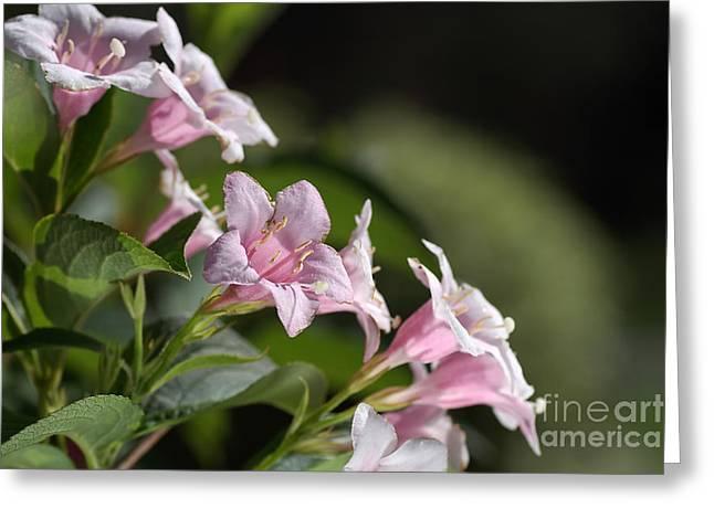 Small Flowers Greeting Card by Joy Watson