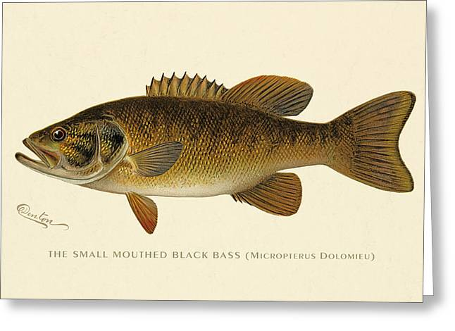 Lithography Greeting Cards - Small Mouthed Black Bass Greeting Card by Gary Grayson