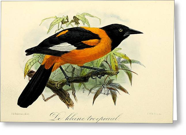 Small Trees Greeting Cards - Small Oriole Greeting Card by J G Keulemans