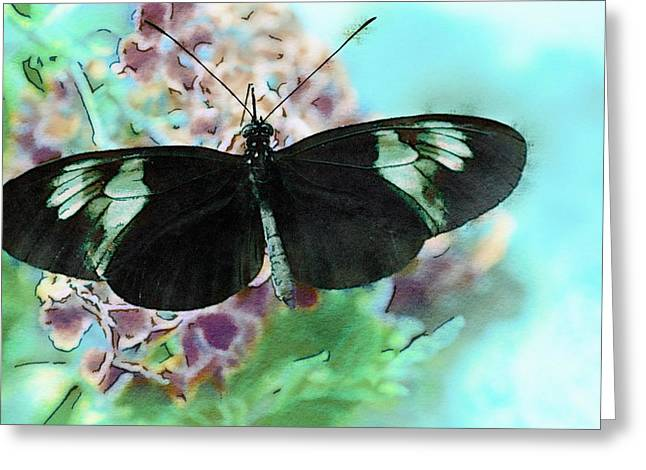 Small Postman Butterfly Greeting Card by Marianna Mills