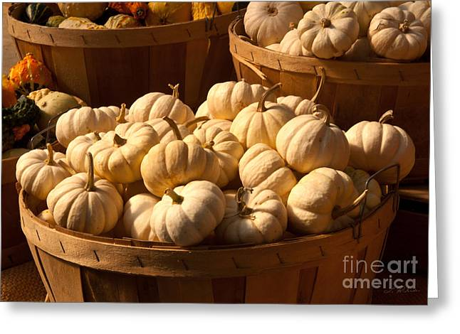 Owner Greeting Cards - Small Pumpkins Greeting Card by Iris Richardson