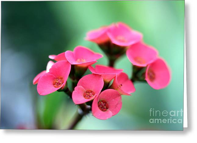 Small Red Flower Greeting Card by Henrik Lehnerer