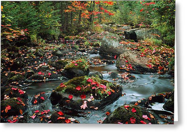 Fallen Leaf Greeting Cards - Small Stream In Fall, Upper Peninsula Greeting Card by Panoramic Images