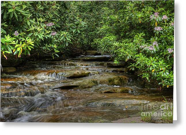 Small Stream In West Virginia With Mountain Laurel Greeting Card by Dan Friend