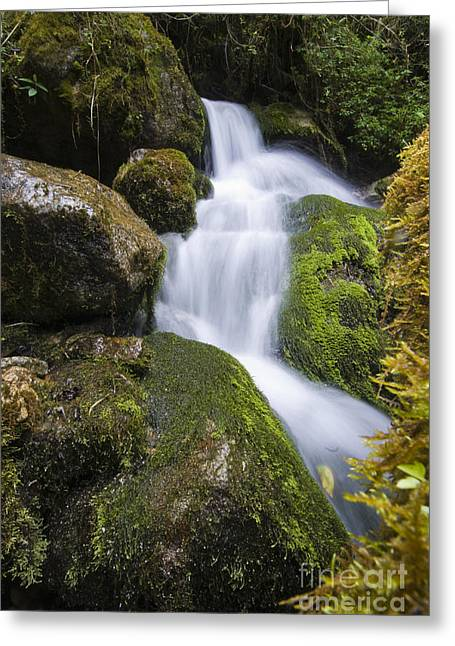 The Amazons Greeting Cards - Small Stream Greeting Card by William H. Mullins