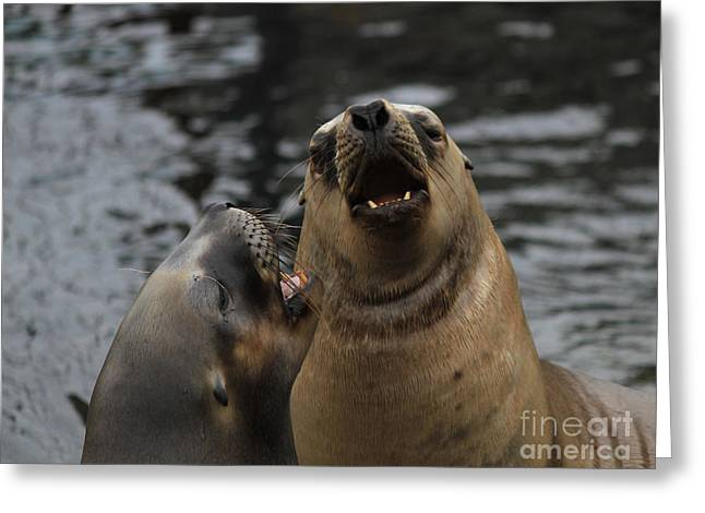 Sea Lions Greeting Cards - Small talk Greeting Card by Four Hands Art