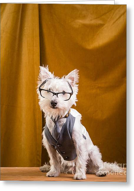 Pet Photographs Greeting Cards - Small white dog wearing glasses and vest Greeting Card by Edward Fielding
