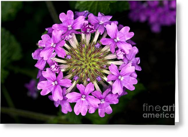 Macro Flower Photography Greeting Cards - Small Wonders Greeting Card by Terry Elniski