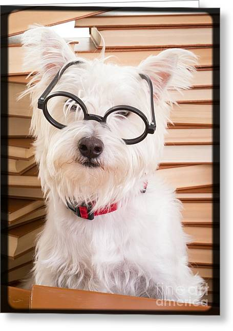 Smart Doggie Greeting Card by Edward Fielding