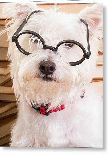 Smart Doggie Phone Case Greeting Card by Edward Fielding