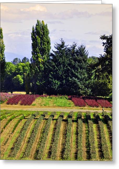 Sauvie Island Greeting Cards - Smell The Beauty Of Life Greeting Card by Image Takers Photography LLC - Carol Haddon