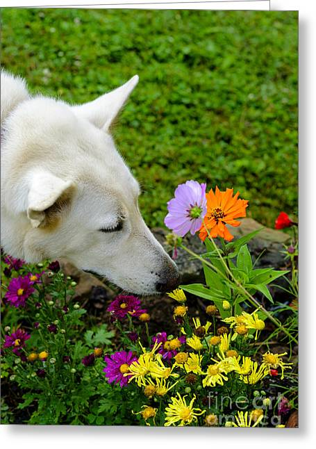 Guard Dog Photographs Greeting Cards - Smell the Flowers Greeting Card by Thomas R Fletcher