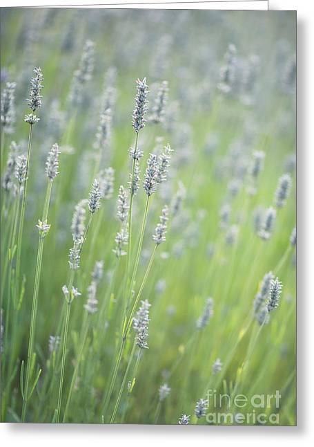 Fragrant Flowers Greeting Cards - Smell The Lavender Greeting Card by Rebecca Cozart
