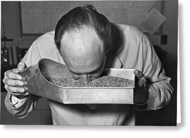 One Mature Man Only Greeting Cards - Smelling Grain Inspector Greeting Card by Underwood Archives