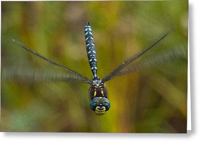 Dragonflies Greeting Cards - Smile for the Camera Greeting Card by Randy Hall