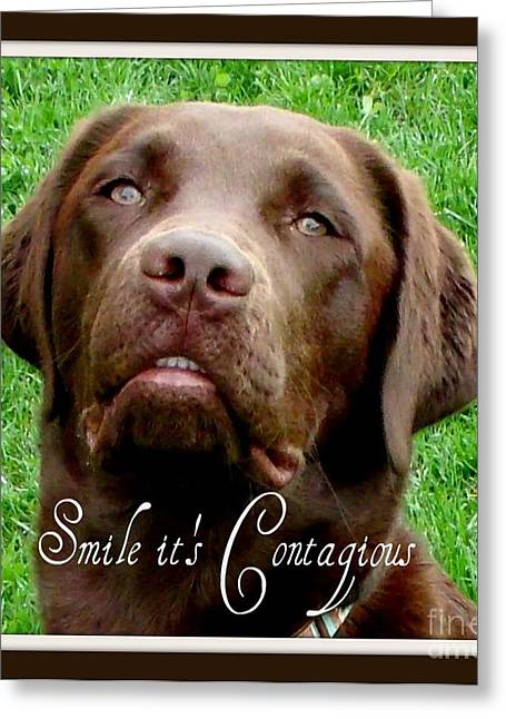 Chocolate Lab Greeting Cards - Smile it is Contagious Greeting Card by Gail Matthews