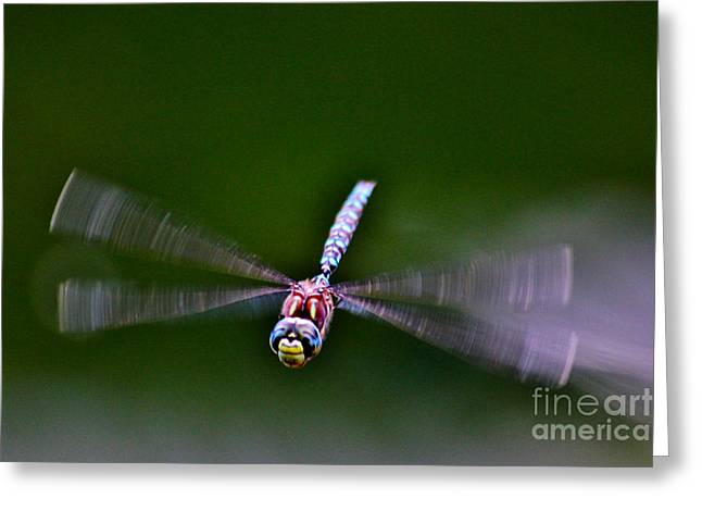 Invertebrates Greeting Cards - Smiley Face Dragonfly Coming at You Greeting Card by Janice Rae Pariza