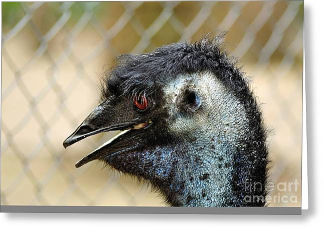Australian Native Bird Greeting Cards - Smiley Face Emu Greeting Card by Kaye Menner
