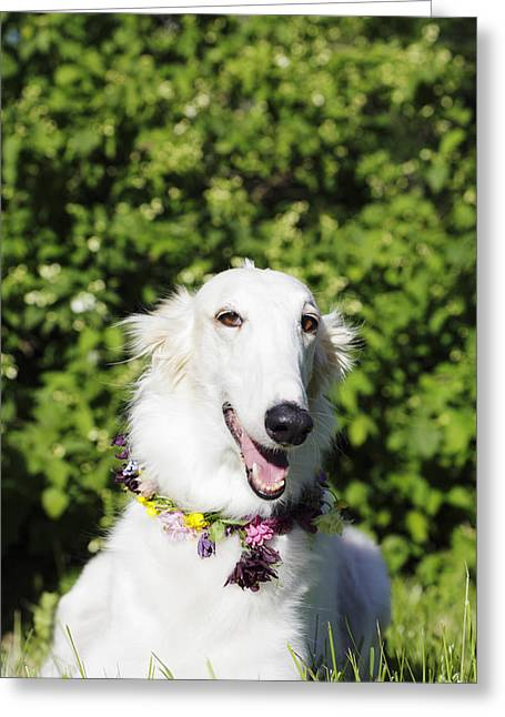 Sight Hound Greeting Cards - Smiling Borzoi Dog Greeting Card by Christian Lagereek