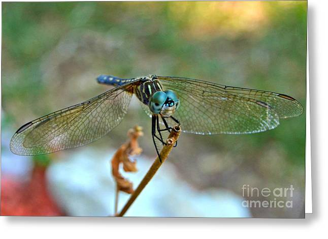 Macro Dragonfly Picture Greeting Cards - Smiling Dragon Fly Greeting Card by Peggy  Franz