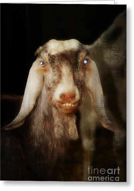 Owner Art Mixed Media Greeting Cards - Smiling Egyptian Goat I Greeting Card by Michael Braham