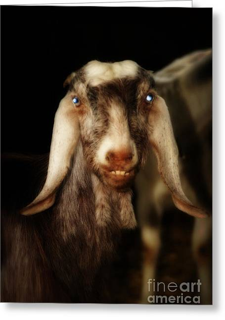 Owner Art Mixed Media Greeting Cards - Smiling Egyptian Goat II Greeting Card by Michael Braham