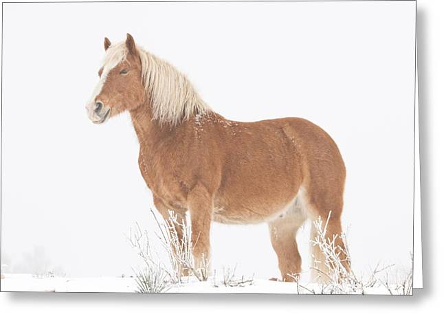 Rocky Mountain Foothills Greeting Cards - Smiling Palomino in the Snow Greeting Card by James BO  Insogna