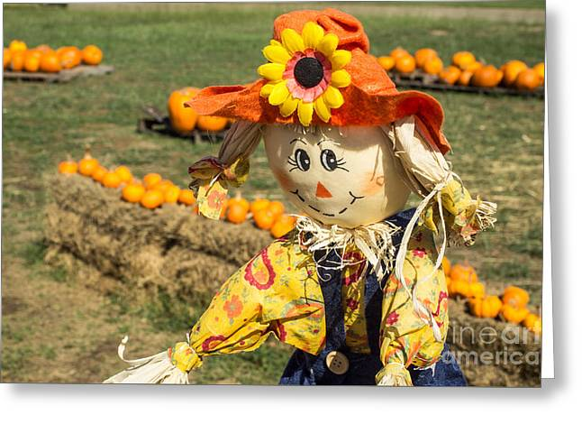 Sunflower Patch Greeting Cards - Shy scarecrow and pumpkins Greeting Card by Imagery by Charly
