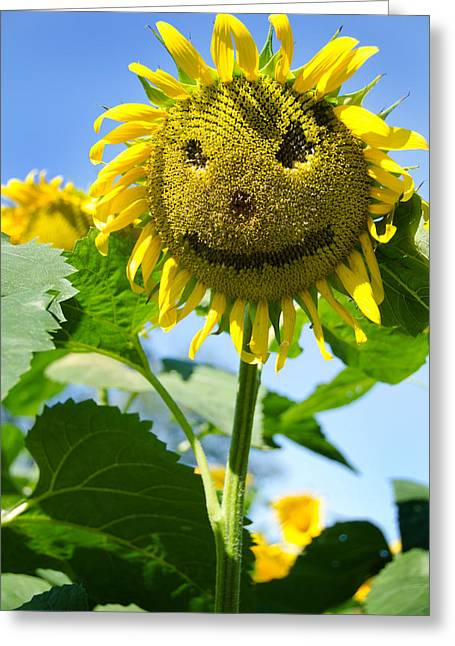 Griswold Connecticut Greeting Cards - Smiling Sunflower Greeting Card by Donna Doherty