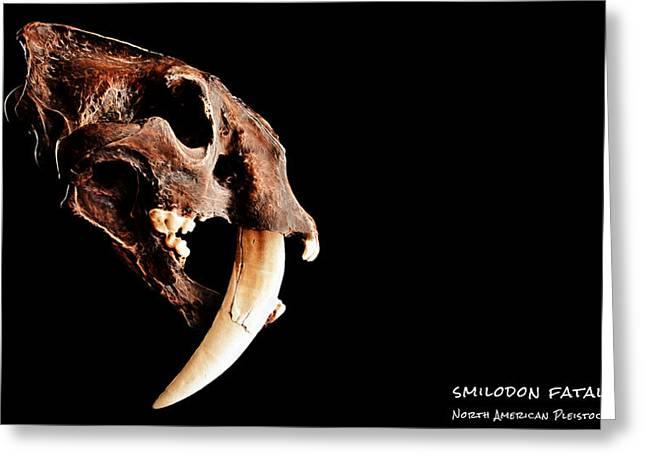 Tiger Fractal Greeting Cards - Smilodon fatalis Skull 3 Greeting Card by Weston Westmoreland