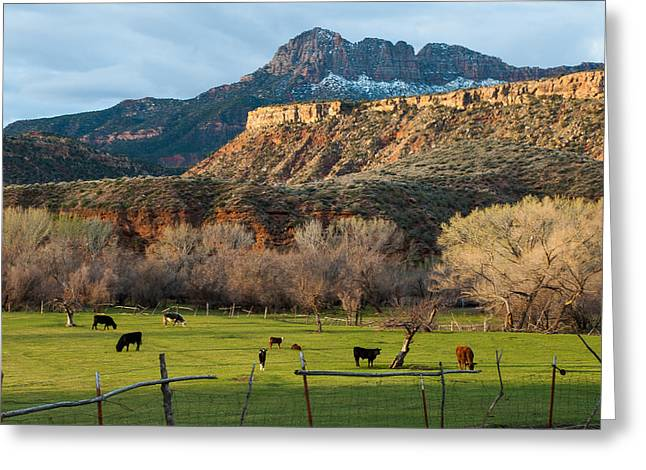 Geobob Greeting Cards - Smithsonian Butte and Cattle in Green Pastures Two Feathers Ranch Rockville Utah Greeting Card by Robert Ford