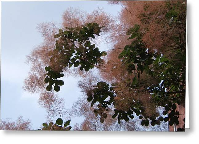 Flowers Against The Sky Greeting Cards - Smoke Bush Greeting Card by Ellen Di Piazza