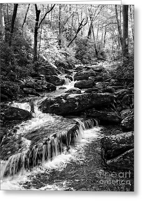 Beautiful Scenery Greeting Cards - Smokey Mountain  Hidden Cascades Greeting Card by Lee Craig