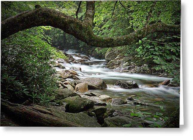 Smokey Mountain Stream. No 547 Greeting Card by Randall Nyhof