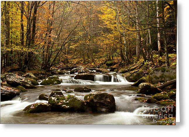 Tn River Greeting Cards - Smoky Mountain Gold II Greeting Card by Douglas Stucky
