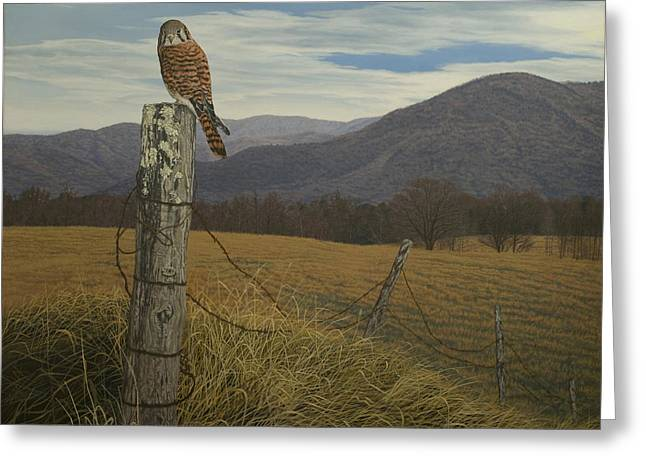 Smoky Paintings Greeting Cards - Smoky Mountain Hunter-American Kestrel Greeting Card by James Willoughby III