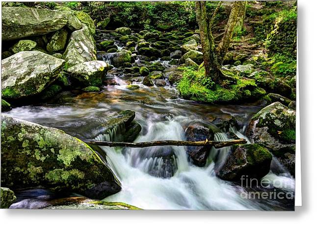 Moss Green Greeting Cards - Smoky Mountain Stream 4 Greeting Card by Mel Steinhauer