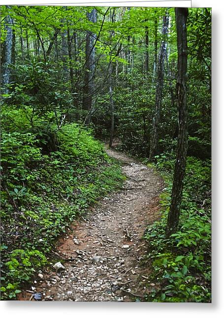 Green Foliage Greeting Cards - Smoky Mountain Trail Greeting Card by Frozen in Time Fine Art Photography