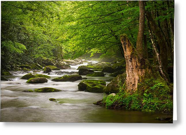 Lush Greeting Cards - Smoky Mountains Solitude - Great Smoky Mountains National Park Greeting Card by Dave Allen