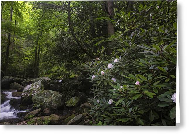 Darren Greeting Cards - Smoky Mountains Stream Greeting Card by Dwoodphotography Darren Barnes