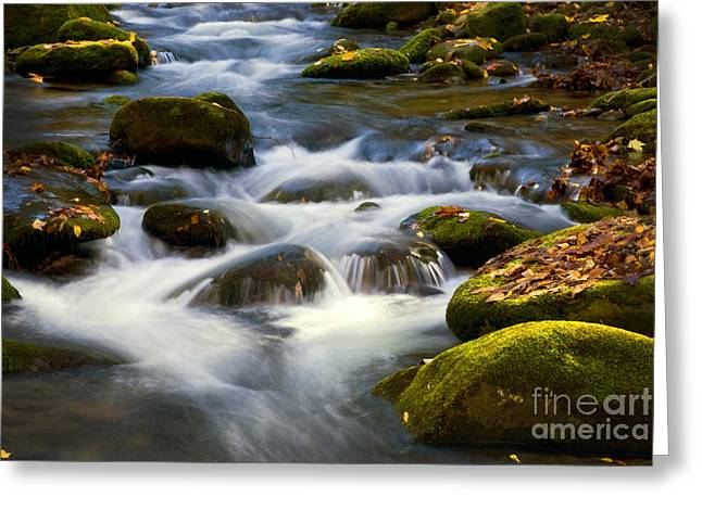 Tn Greeting Cards - Smoky Mtn stream - 380 Greeting Card by Paul W Faust -  Impressions of Light