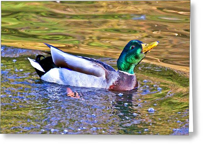 Puddle Paint Greeting Cards - Smooth Landing Duck Greeting Card by Athena Mckinzie