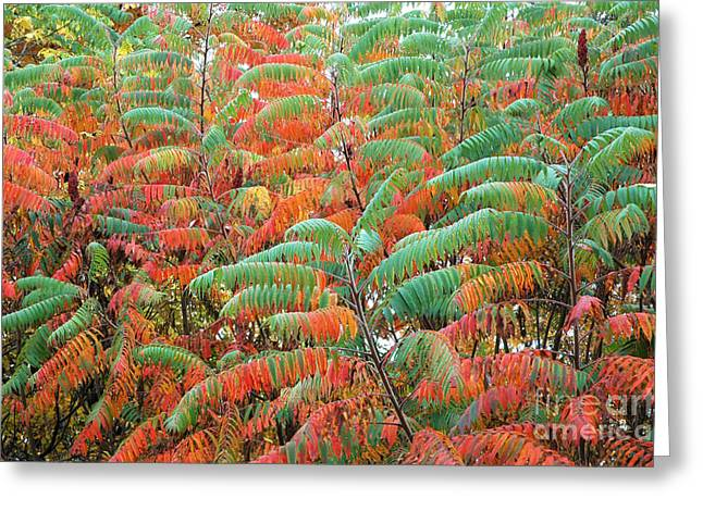 Glabra Greeting Cards - Smooth Sumac Red and Green Leaves Greeting Card by Thomas R Fletcher
