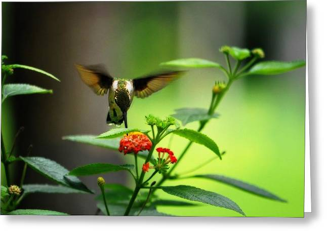 Daughter Gift Greeting Cards - Ruby Throated Hummingbird  Greeting Card by Jill Jacobs