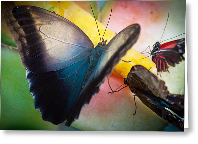 Disambiguation Greeting Cards - Snack Time for the Butterflies Greeting Card by David Patterson
