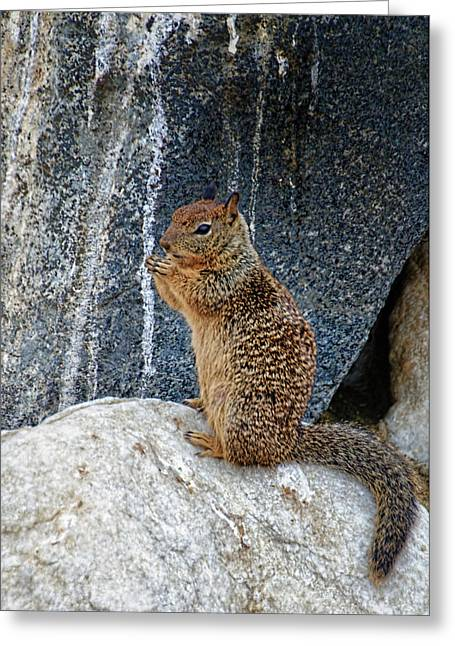 Bushy Tail Greeting Cards - Snack Time Greeting Card by Jon Berghoff