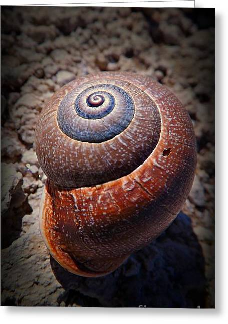 Invertebrates Greeting Cards - Snail Beauty Greeting Card by Clare Bevan