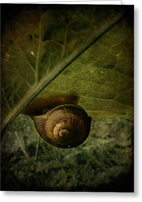 Barbara Orenya Greeting Cards - Snail camp Greeting Card by Barbara Orenya